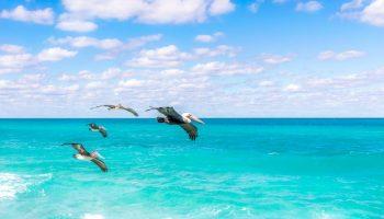 birds-flying-over-caribbean-ocean