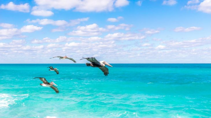 birds-flying-over-caribbean-ocean