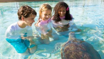Family-Friendly Hotels