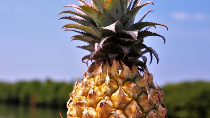 pineapple-sky-background