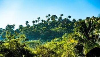 lush-riviera-maya-jungle-mexico