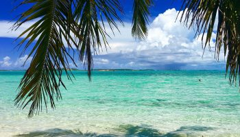 tropical-bahamas-beach-palm-turquoise-water