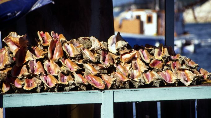 conch-stand