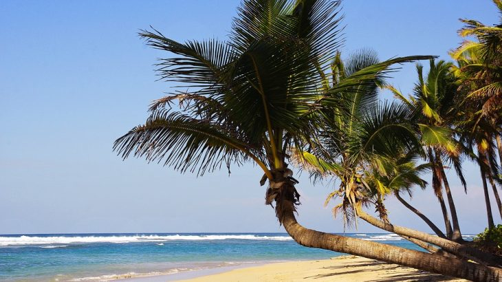 punta-cana-beach-palm-tree