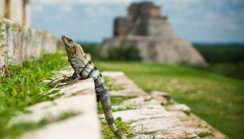 iguana-chichen-itza-yucatan