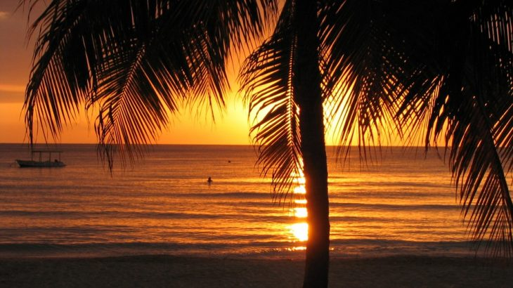 palm-tree-orange-sunset-ocean