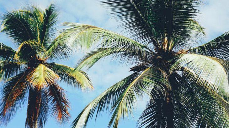 palm-tree-blue-sky