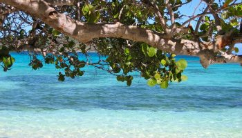 tree-over-water-barbados