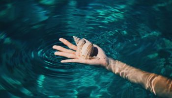 holding-shell-conch-water