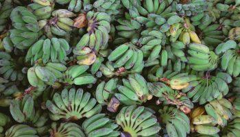 green-plantains