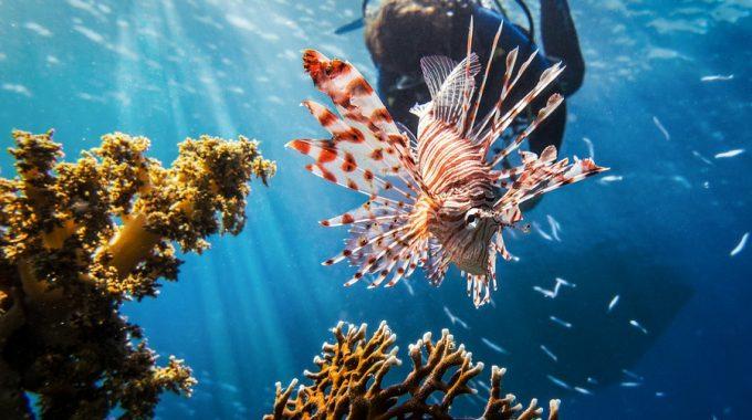scuba-diver-lionfish-coral