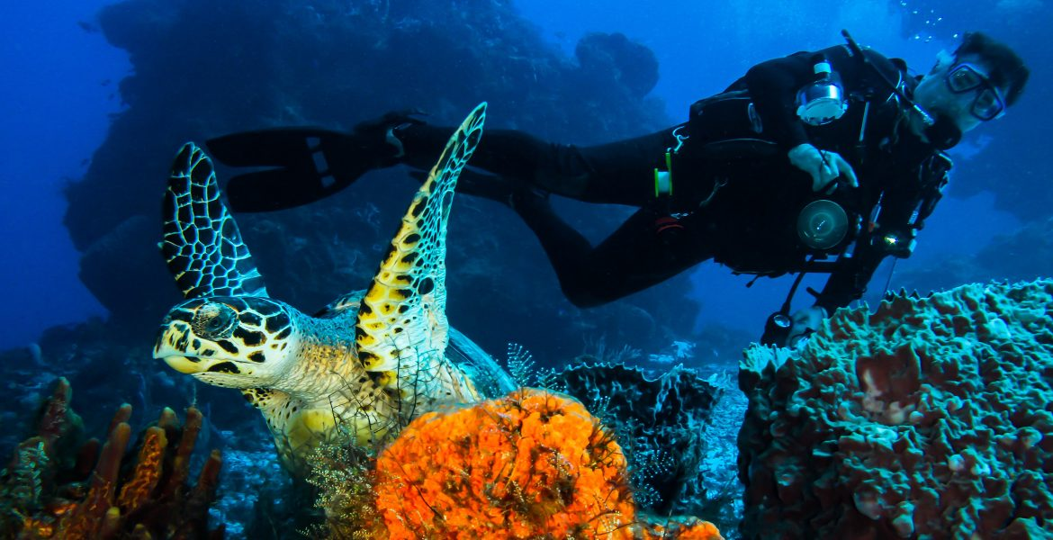 sea-turtle-diver-cozumel