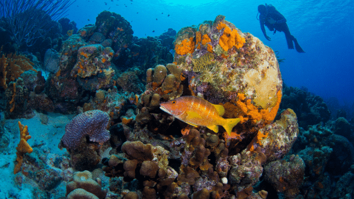 reef-fish-diver-bonaire