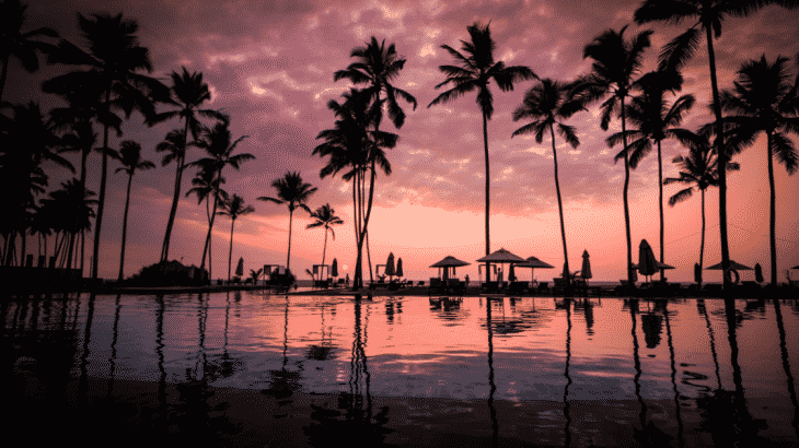 resort-pool-palm-trees-sunset