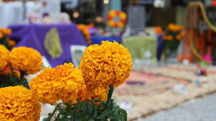 marigold-flowers-day-dead-mexico-altar