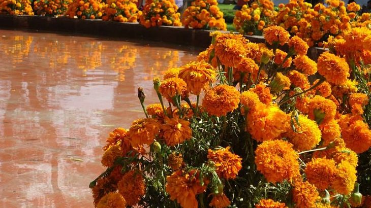 day-dead-marigold-flowers-in-boats-lake-patzcuaro