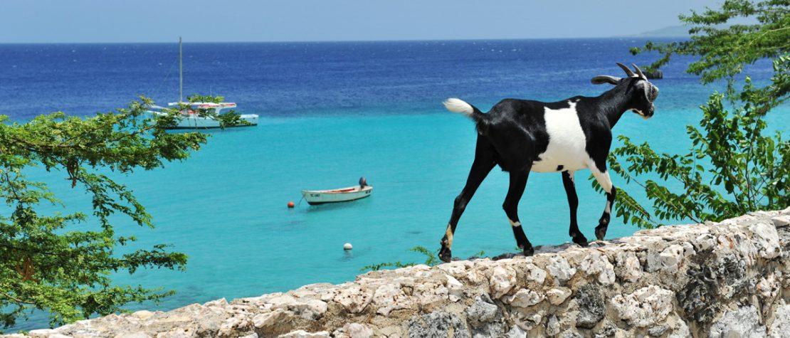 Goat-Curaçao