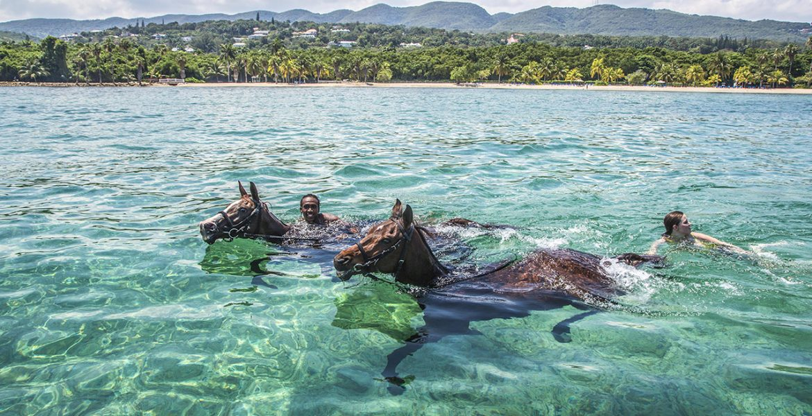 horses-swimming-half-moon-jamaica