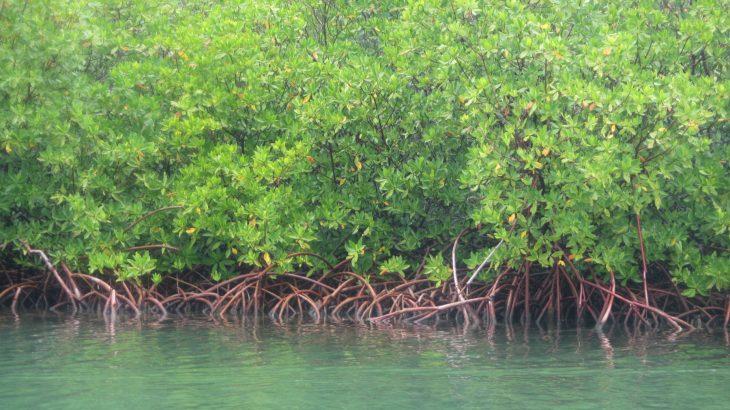 mangrove-lagoon