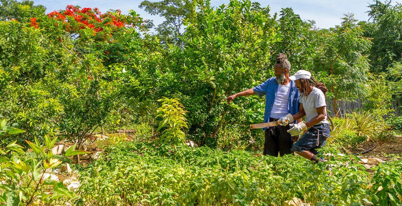 rockhouse-hotel-negril-jamaica-organic-garden