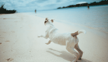 dog-running-beach-blue-water