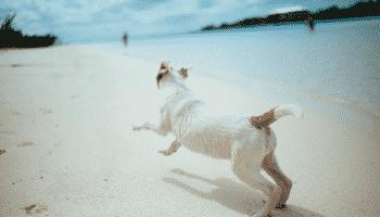 dog-running-beach-blue-water