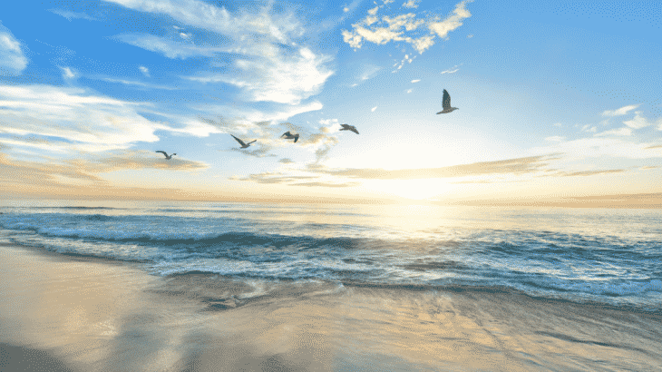 birds-flying-over-beach