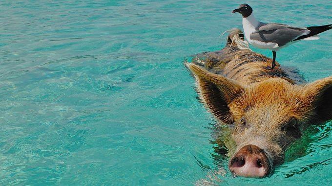 Staniel Cay, Exuma Cays, The Bahamas