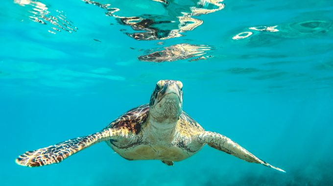 sea-turtle-clear-water