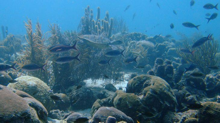baby-turtle-reef