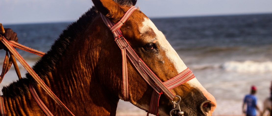 brown-horse-on-beach