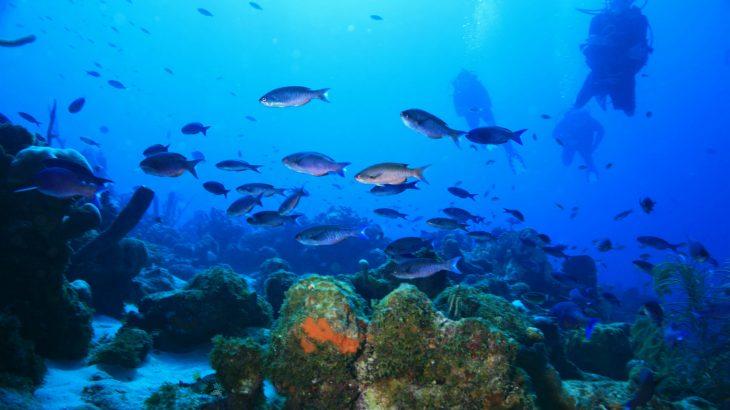 blue-underwater-fish-scuba-diver