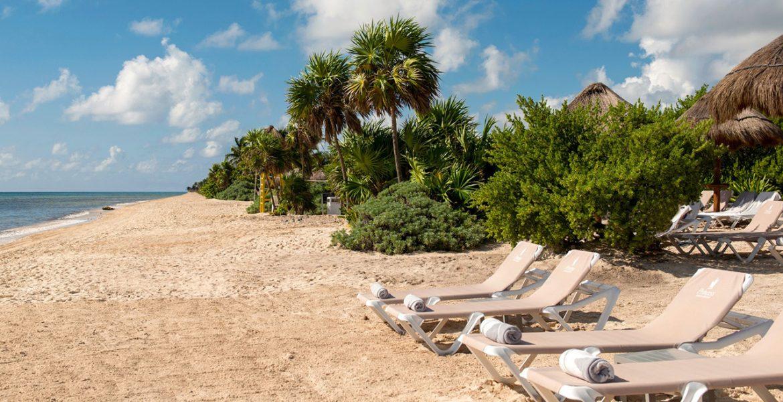 golden-sand-beach-loungers-palm-trees