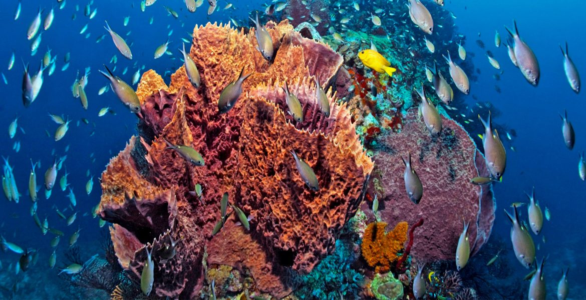 colorful-underwater-coral-reef