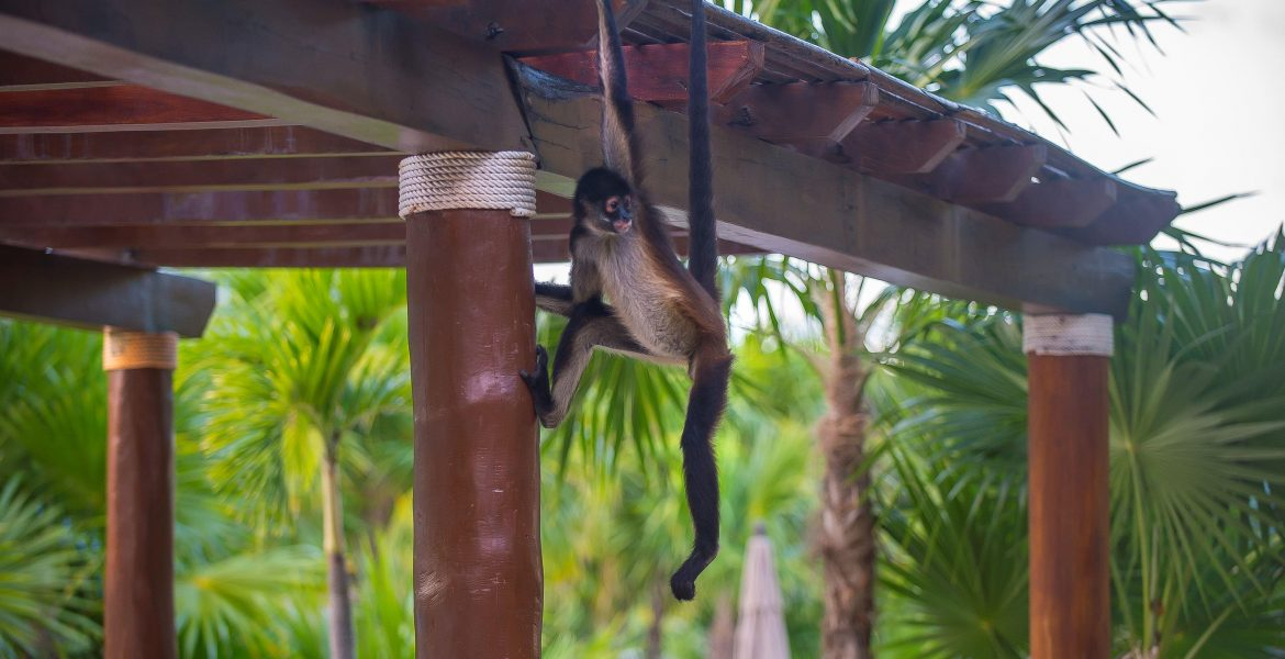 monkey-hanging-on-roof-green-jungle