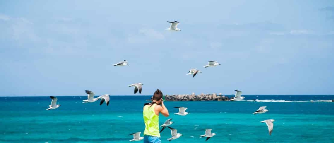 man-taking-photo-of-seagull-over-turquoise-ocean-water