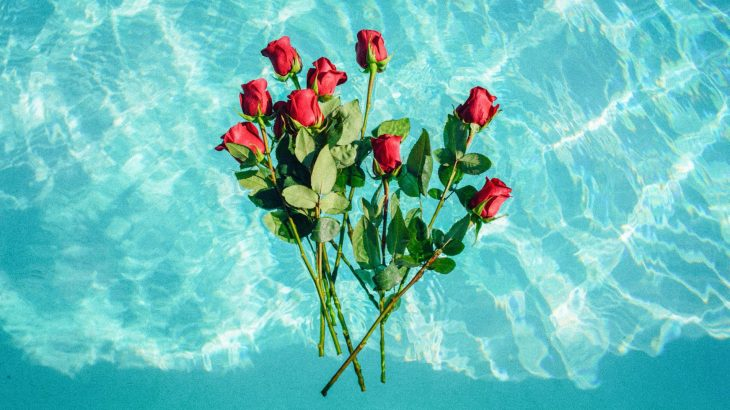 red-roses-floating-clear-blue-water