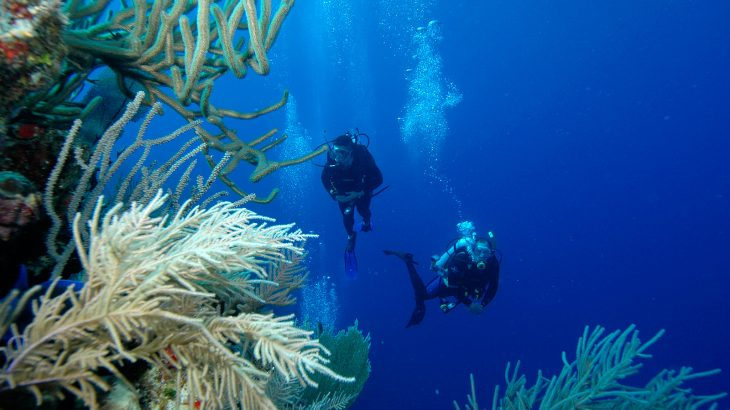 Diving into the Grand Turk Wall and past coral reefs in Grand Turk Turks and Caicos