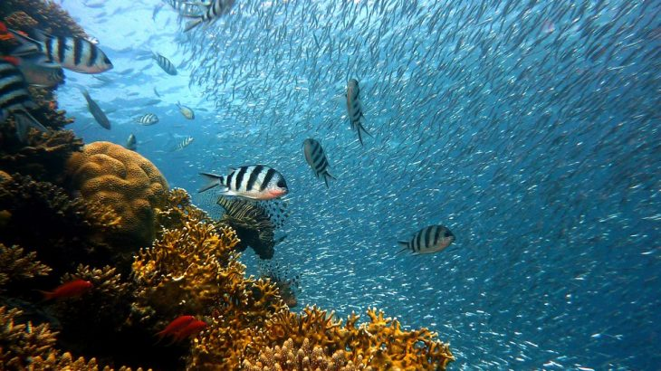 underwater-fish-coral-places-to-visit-cuba