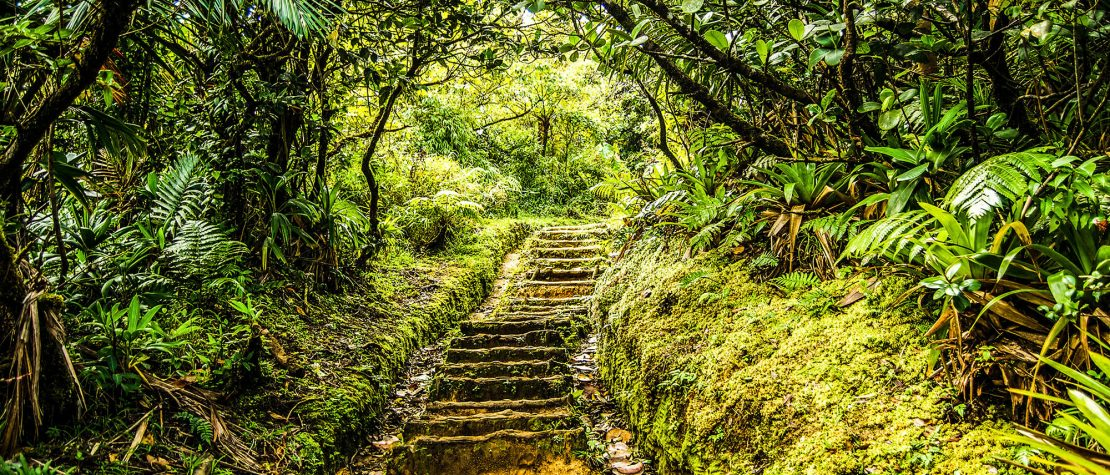 stairway in greenery in forest in Dominica