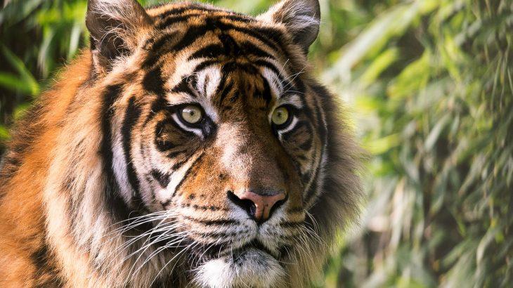 eco-friendly-travel-animals-in-natural-habitat-or-sanctuary