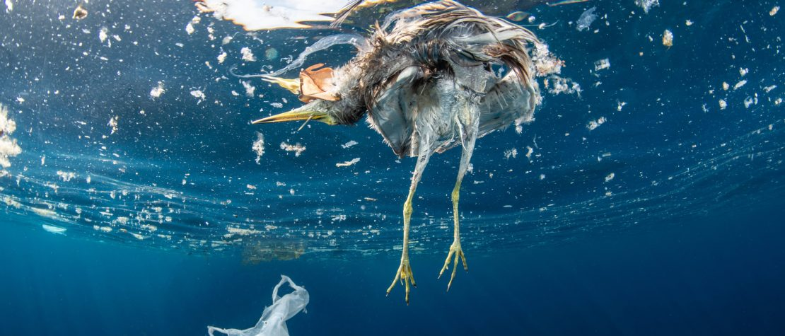 scary-facts-plastic-pollution-dead-bird-plastic-floating-ocean