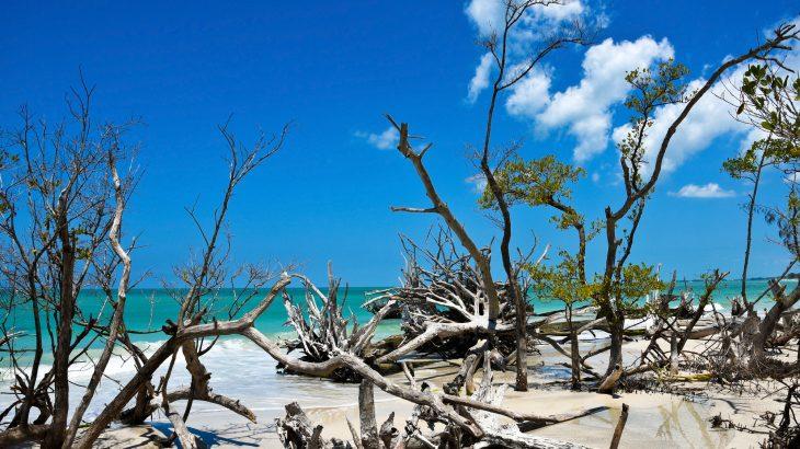 beaches near sarasota fl beer can island longboat key