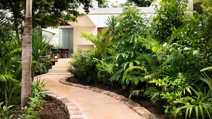 a-path-leading-through-the-jungle-to-a-casita