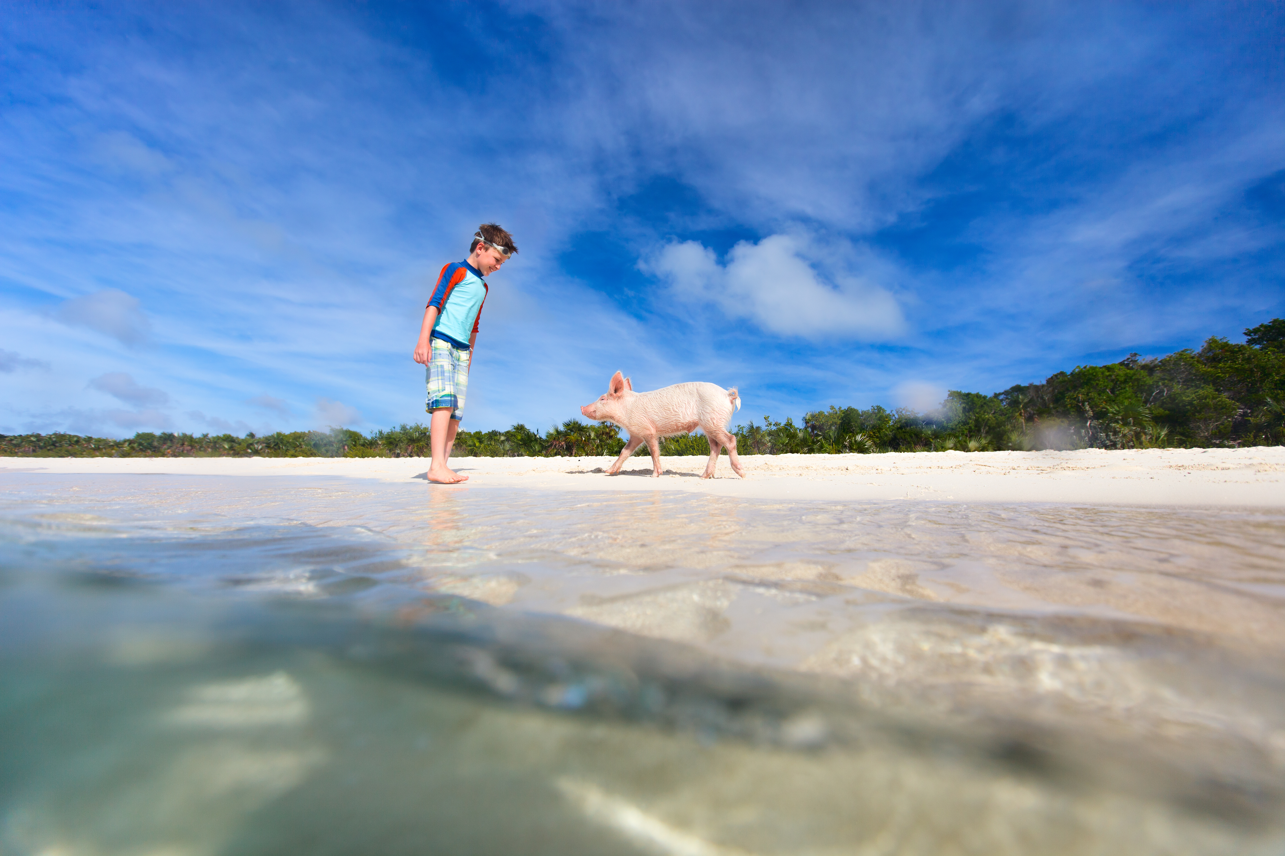 Animal Encounters to Add to Your Caribbean Vacation | Beach