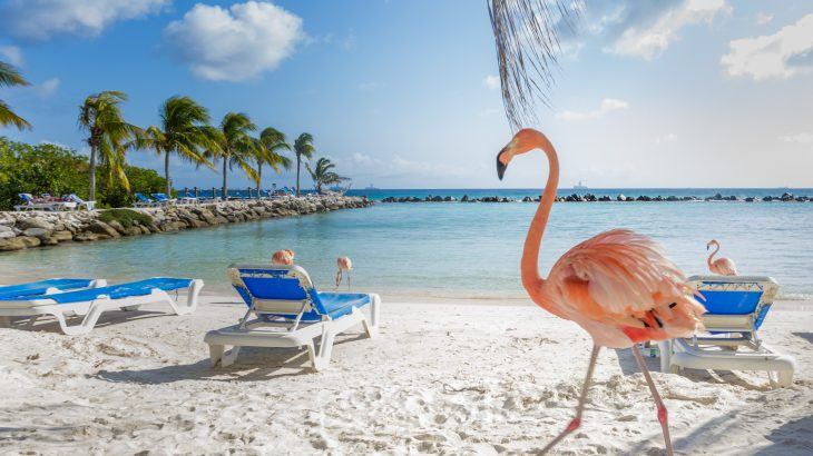 Flamingos on Flamingo Beach in Aruba