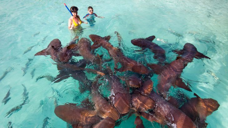 Nurse Sharks in the Exumas
