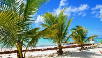 three-palm-trees-beach-water