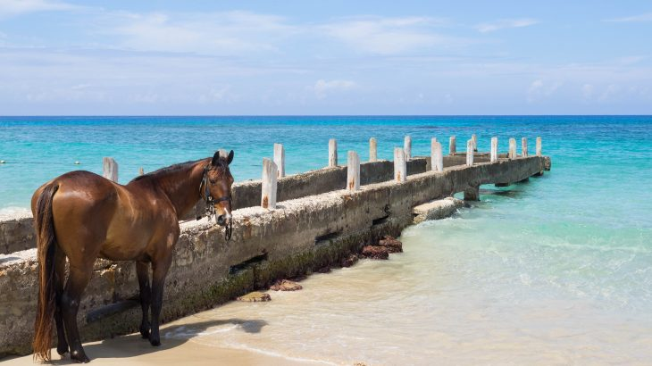 Ride-horses-on-the-beach-in-Montego-Bay